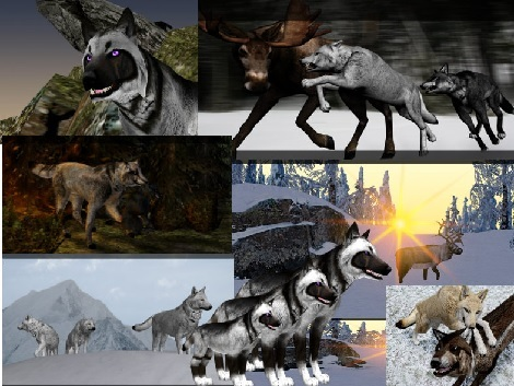 wolf quest game free download