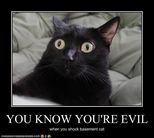 You also shocked basement cat... :(