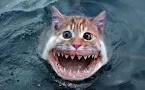 鲨鱼 cat