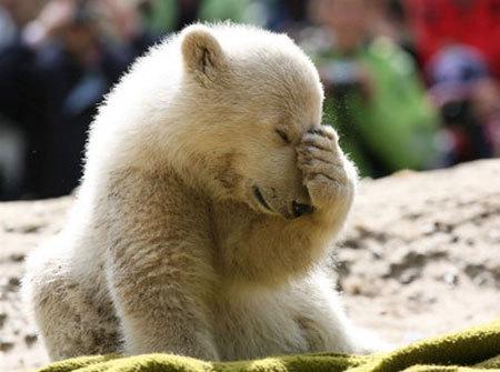 I'm Coda the Polar Bear~!!!