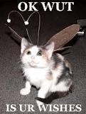 Cats :) <3