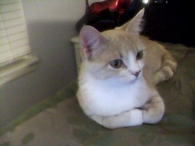 i like this name Crystal..... my Gatti name is lilah:D