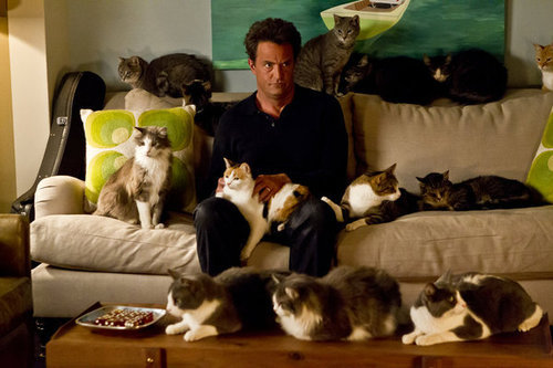 This is cute and funny!! Matthew Perry with a bunch of cats!! XD