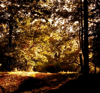 It's really secluded and out of the way, and considering I live in the middle of the forest, it's gorgeous around the fall. (Like in the picture below. That's my driveway.) I can't wait until I get my fancy, expensive, professional grade camera, because it's so flipping gorgeous out here.