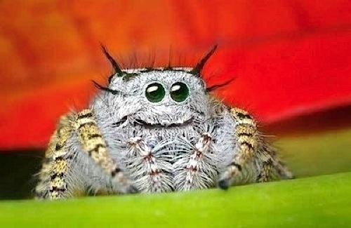 Cutest. Spider. Ever