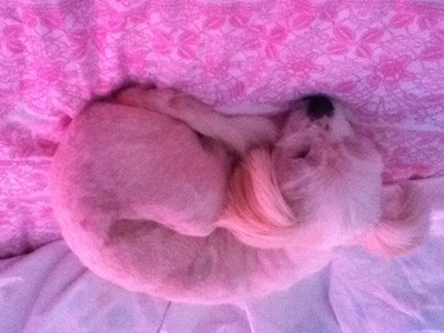 My pet dog Molly! :) <33333 *^^*
