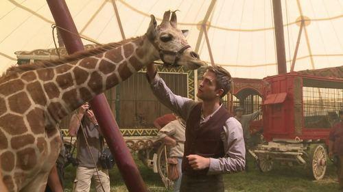 Robert Pattinson petting a giraffe( from Water for Elephants)