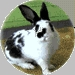 A couple of months il y a my rabbits claw had been ripped off and i aint no good wiv blood and when i saw it i went blind for like 10 minutes and then i fainted and when i fell i hit my head and then it damaged my neck and i had 2 wear a collier for 1 mois and thats my rabbit :)