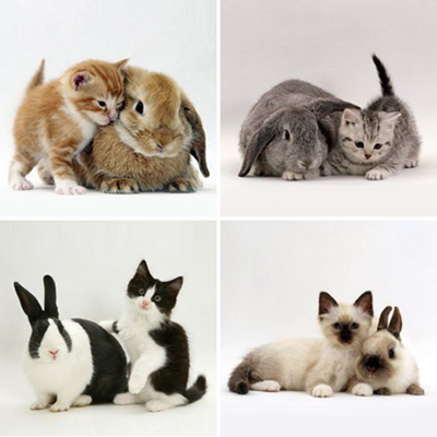 Bunny & Kitten match each other. <33