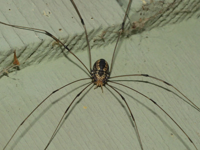 Freaky spiders! Like this one!! *shudders*