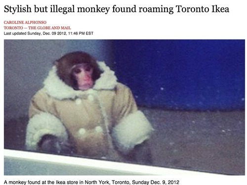 I'm not a hardcore fan of memes. Though I must say, Stylish but illegal monkey sure is something.