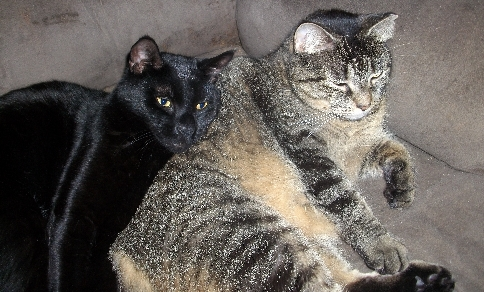 My two cats, Cage the black cat and Sierra the tabby. :)
