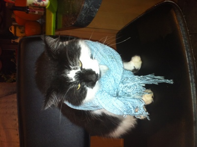After my sister put this scarf on him, he seemed to be ok with it though XD