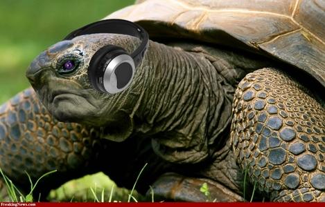 A черепаха :) Любовь it so much <3