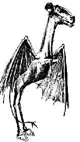 I like many of them, but I would have to say one of my 收藏夹 is the Jersey Devil. The Jersey Devil has the head and hooves of a horse, the face of a collie, wings of a bat, and a four foot long serpentine body. The beast's eyes glow red and have the ability to paralyze a victim. It was first spotted in the 1800's when a man shot a cannonball at the creature, but it wasn't harmed and flew away. For 更多 information visit this link: http://www.unknown-creatures.com/jersey-devil.html