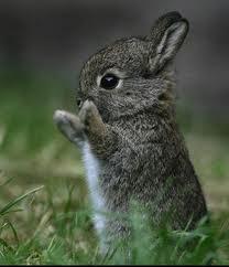 A Baby Bunny.......