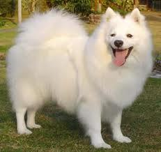 My dog Jack :D