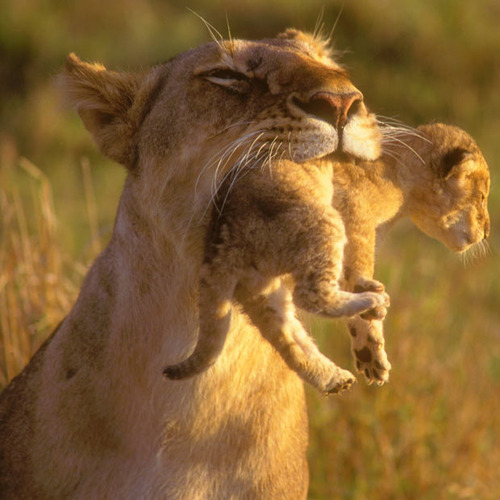Mother & cub. <33 <33
