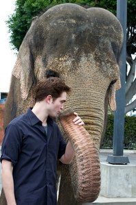 my Robert with his 象, 大象 co-star,Tai,giving her a little kiss...awww!!!!!!!!