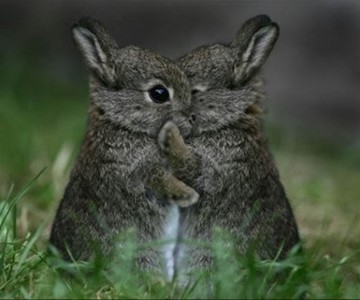 This it is so cute. :)