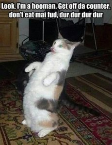 Everyone loves an LOLcat