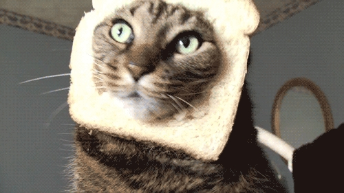 """It's a tie between """"Angel Solidarity Sandwiches"""" and Cat Sandwich. Cat sandwich beats Supernatural reference any day."""