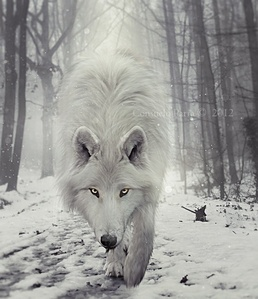 My spirit animal is the wolf