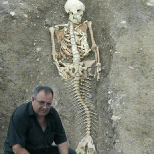 is the goverment hiding something from us mermaids maybe r real look up on google on images if mermaids r real it will show lots of pictures on there skelenton