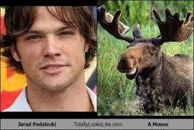 Jared / moose