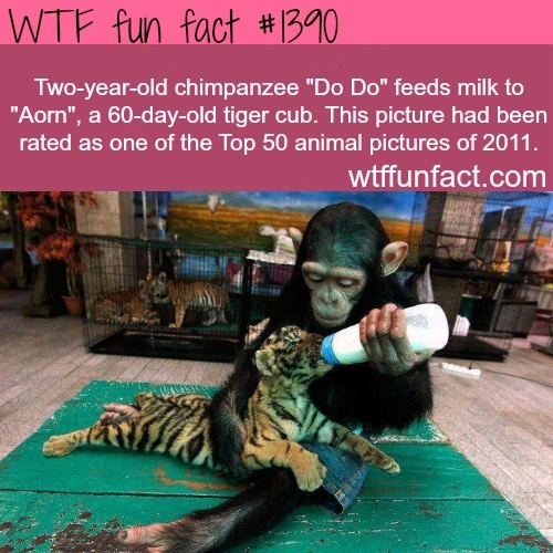 This WTF fun fact