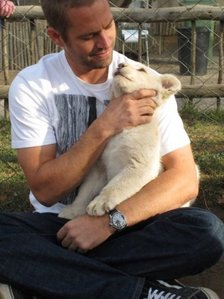 my fave American born hottie,Paul Walker holding one of my fave animals,a white tiger cub<3