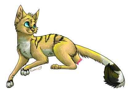 Good Names For Yellow Boy Cats