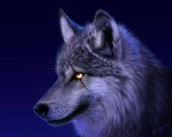 loups <3