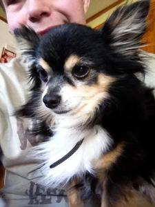 I used to have one, his name was Duji. He died back in January and I miss him....a lot. He was the best chihuahua ever....he was my sweet lil baby :(
