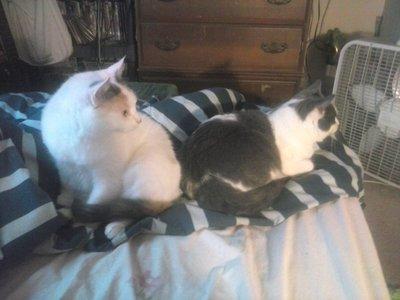 2 Cats!!!!