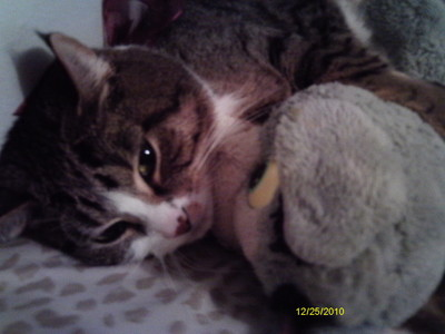 my kitty 스톨, 훔친 mine... but it's a stuffed Tom so idk if it counts... i have bears and stuff 2....WAY 2 many stuffed 동물 in my room.... BUT I STILL 사랑 THEM!!! ....i argued with my mother....