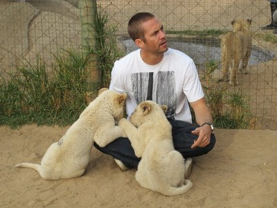 my Fast&Furious babe,Paul Walker with a pair of cute tiger cubs<3