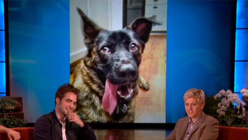 my handsome baby 表示中 a pic of his dog くま, クマ with his mouth open on the Ellen show<3