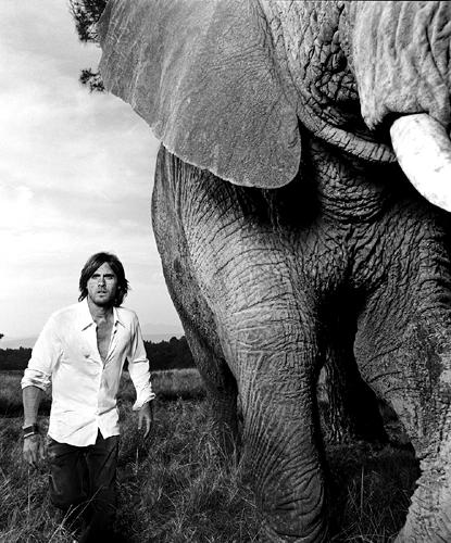 amor elephants