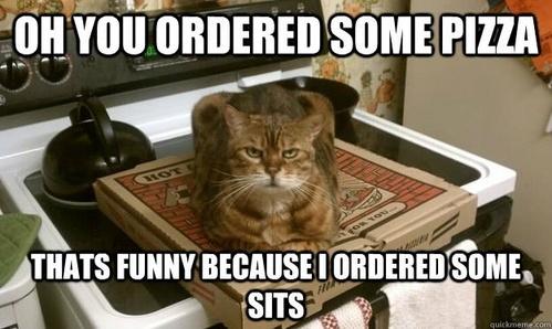 :D Good Kitty !