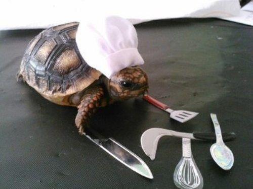 chef schildkröte