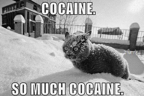 Here's a cat....