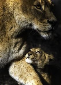 leona & her cub <333
