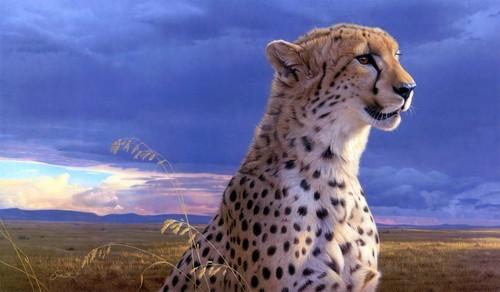 Pretty Cheetah. <3 :)