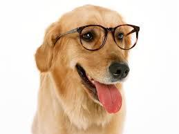 Smart Dog ^^