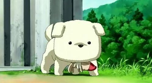 Potato is a dog :3
