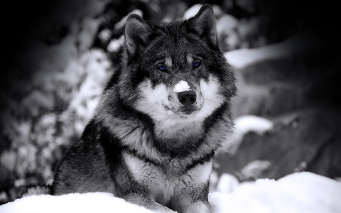 I like/love all animals, my fav is a lobo though ^-^