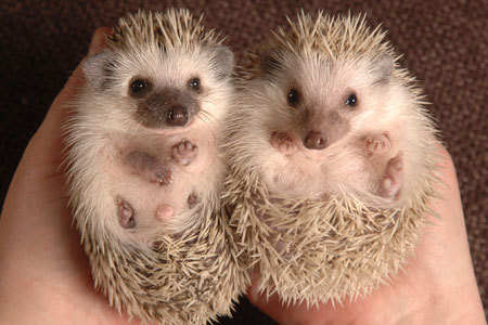 My favourite animal is a hedgehog :3