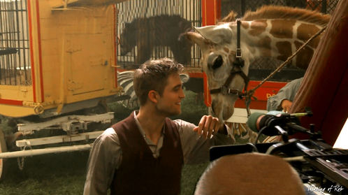 my handsome sweetie looking at his giraffe co-star from Water for Elephants<3