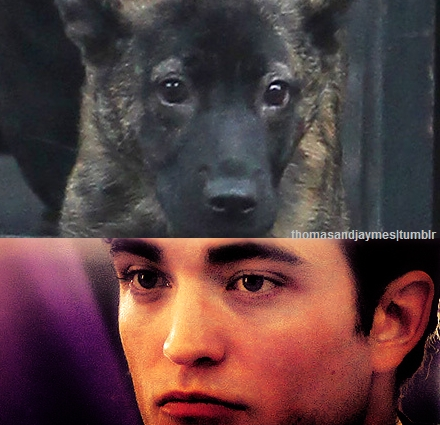 my cute British puppy(with his pup,Bear) making a cute pouty expression on his gorgeous face<3